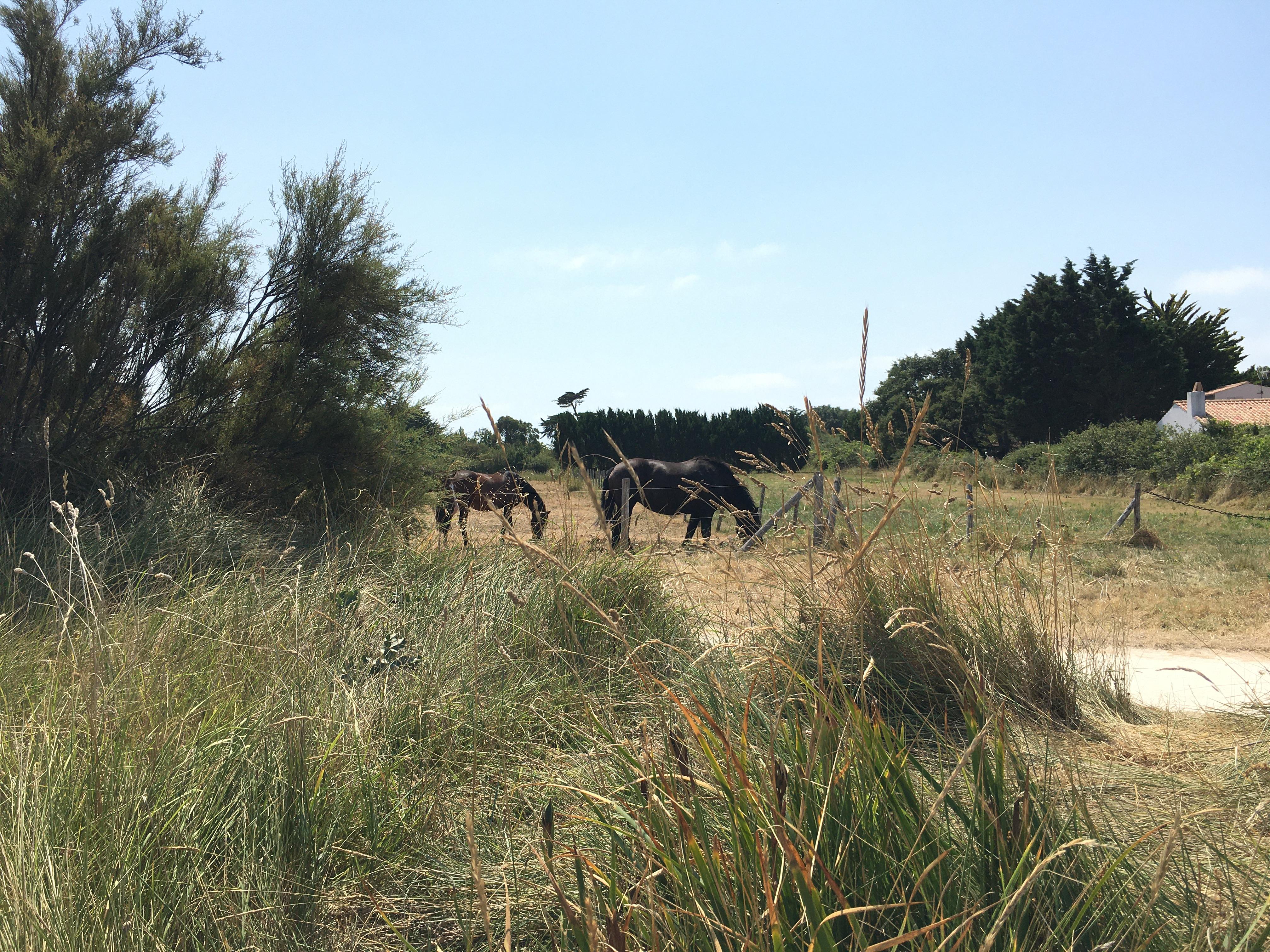 ile-daix-campagne-cheval